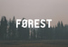Forest Web Design Reading